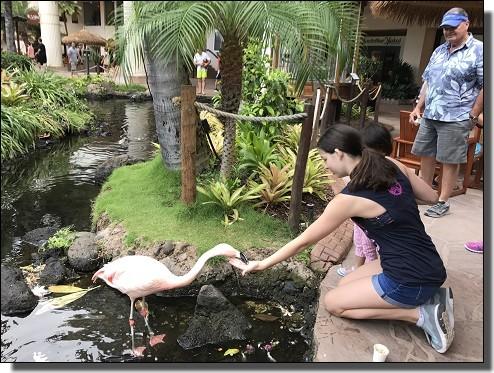 ホテルでフラミンゴに餌付け